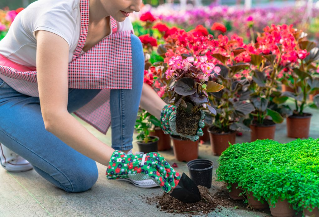 Economical Tips for Gardening and Landscaping